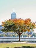 осень boston Стоковая Фотография