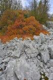 Осень Carso около Aurisina Стоковое фото RF