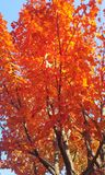 осень dof выходит красное отмелое Стоковое фото RF