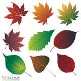 8 осень eps изолировала белизну вектора листьев Стоковое Фото