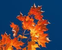 осень fiery выходит стоковые изображения rf