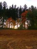 осень forrest Стоковые Изображения