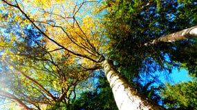 осень forrest Стоковое фото RF