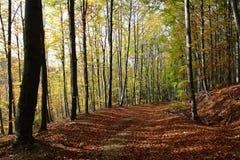 осень forrest Стоковая Фотография