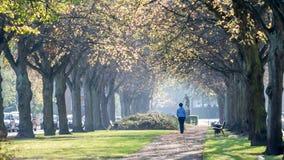 Осень Fredriksberg Стоковое Фото