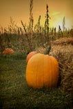 Осень Glo Стоковое Изображение RF