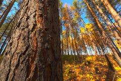 Осень, HDRI стоковая фотография