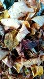 Осень /leaves 1 Serie изображений Стоковые Изображения RF