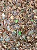 Осень Leeves стоковые изображения