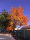 Осень Manassas Стоковое фото RF