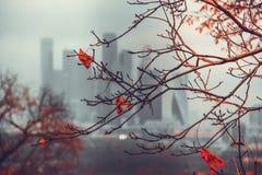 осень moscow Стоковые Изображения RF