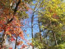 Осень Oak Ridge Стоковые Изображения
