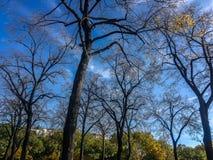 осень paris Стоковые Фото
