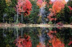 осень s стоковая фотография