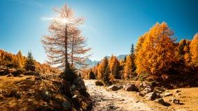 Осень trekking в высокогорной долине Pusteria Стоковая Фотография RF