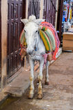 Осел в старом medina Fez, Марокко стоковые изображения rf