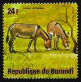 Осел или ишак, asinus africanus Equus, животные Бурунди серии, Стоковое Изображение