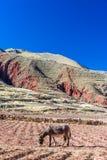 Осел и холмы Стоковые Изображения RF