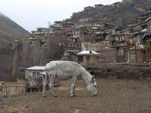 Осел на деревне Kang, северовосточном Иране стоковые изображения rf