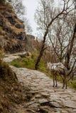 Осел пути Annapurna Стоковые Изображения RF