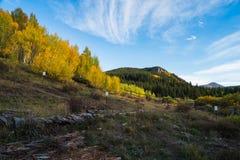 Осины изменяя около Breckenridge Стоковые Изображения RF