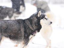 осиплая зима портрета Стоковое Фото