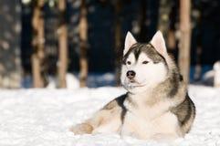 осиплая siberian зима Стоковая Фотография RF