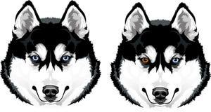 Осиплая голова собаки Стоковые Фото
