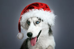 Осиплая собака в красной шляпе santa Стоковое Изображение RF