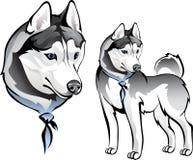 Осиплая собака в bandana иллюстрация вектора