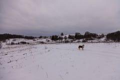 Осиплая собака на дороге Стоковые Изображения