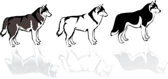 Осиплая собака иллюстрация вектора