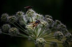 Оси на цветках Стоковые Изображения RF