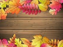 доска покрасила листья деревянным 10 eps Стоковое Изображение