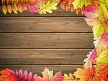 доска покрасила листья деревянным 10 eps Стоковое фото RF