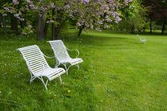 Ослаблять под деревом вишневых цветов Стоковое Фото