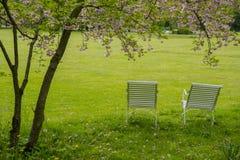 Ослаблять под деревом вишневых цветов Стоковые Фото