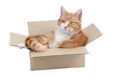 Ослабляя милый tomcat в коробке стоковая фотография