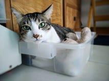 Ослабьте счастливого кота улыбки денежного мешка кота в счастливом доме его личный космос Стоковые Фотографии RF