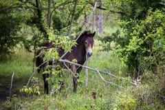 Осленок дикой лошади на луге Стоковая Фотография RF