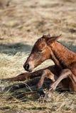 осленок newborn Стоковые Изображения RF