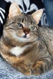 ослепите портрет кота половинный стоковое изображение