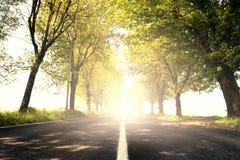 Ослеплять свет на дерев-выровнянной дороге стоковая фотография