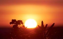 Ослеплять солнце и заводы стоковые изображения rf