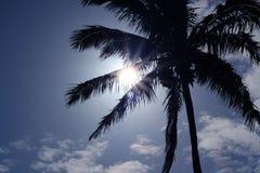 Ослеплять солнце светя через большое дерево над небольшим павильоном в саде стоковое изображение