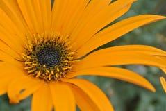 Ослеплять цветок стоковые фотографии rf
