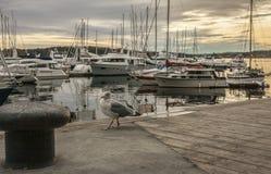 Осло-фьорд, чайка и шлюпки на заходе солнца стоковое изображение rf