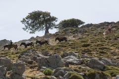 Ослы всадника лошади ведущие с грузом Стоковые Фото
