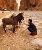 Ослы на улицах ущелья Todgha, Марокко стоковые изображения