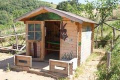 ослы расквартировывают малое деревянное Стоковое Изображение